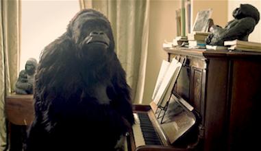 """Gorilla – """"Run"""""""
